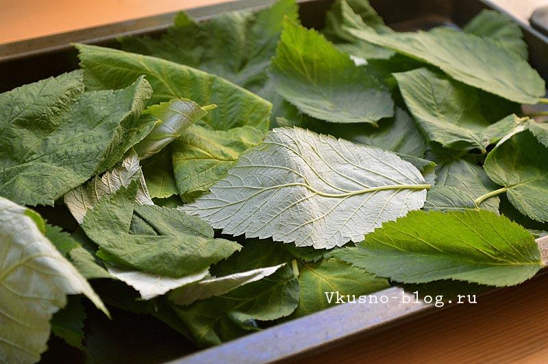 Домашний чай из листьев малины - свежие листья
